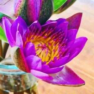 Lila Blume für besondere Yoga-Kurse mit Marion Voigt